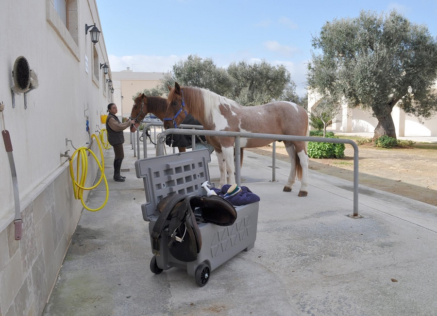 Jolly baule cavallo
