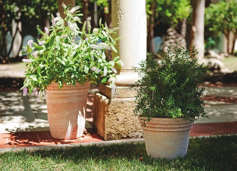 Gradinia Abruzzo Vasi