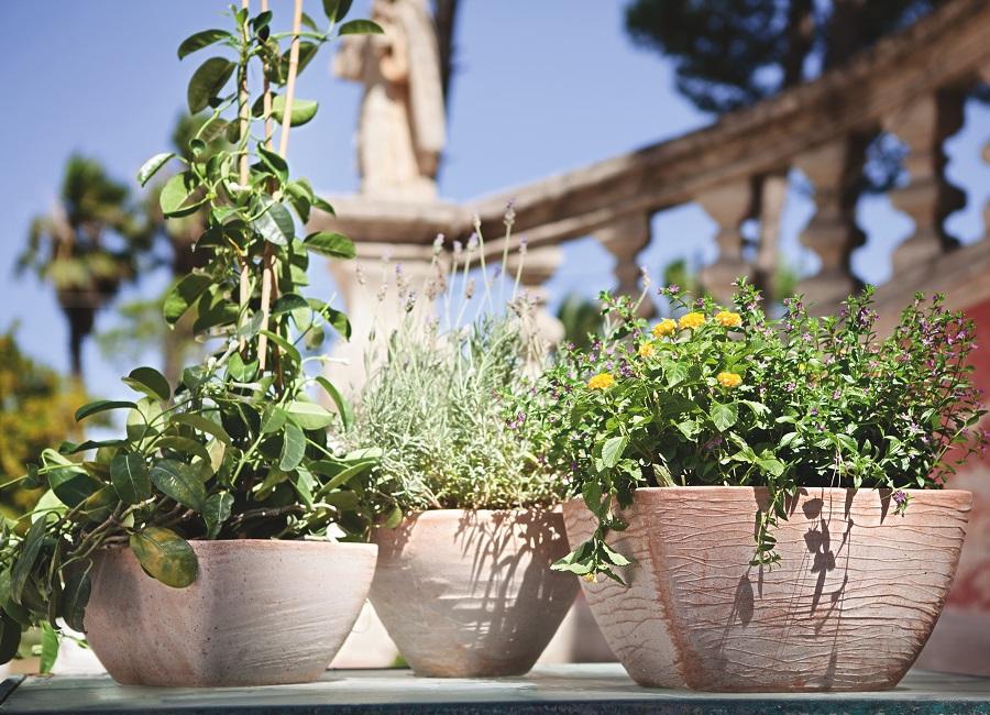 Posidonia Laminaria Abruzzo Vasi