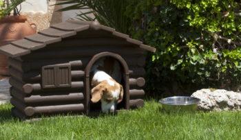 cucce e accessori per animali domestici salento
