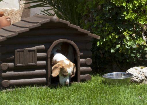 gatti-cani-cucce-accessori-per-animali-domestici-brindisi-lecce