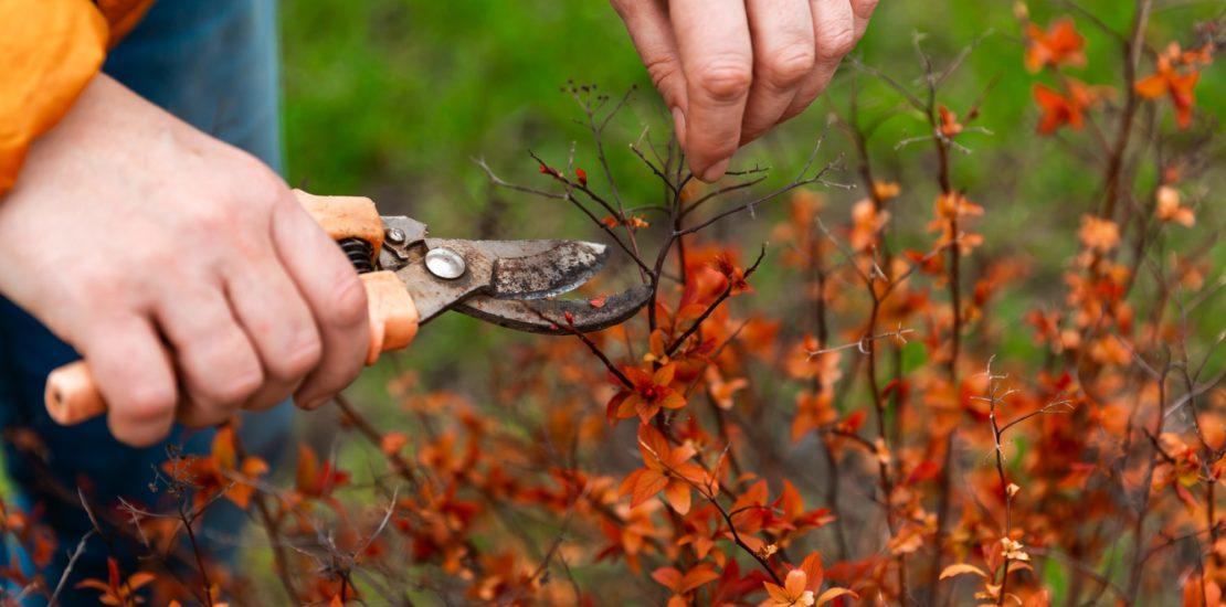 potatura in autunno consigli