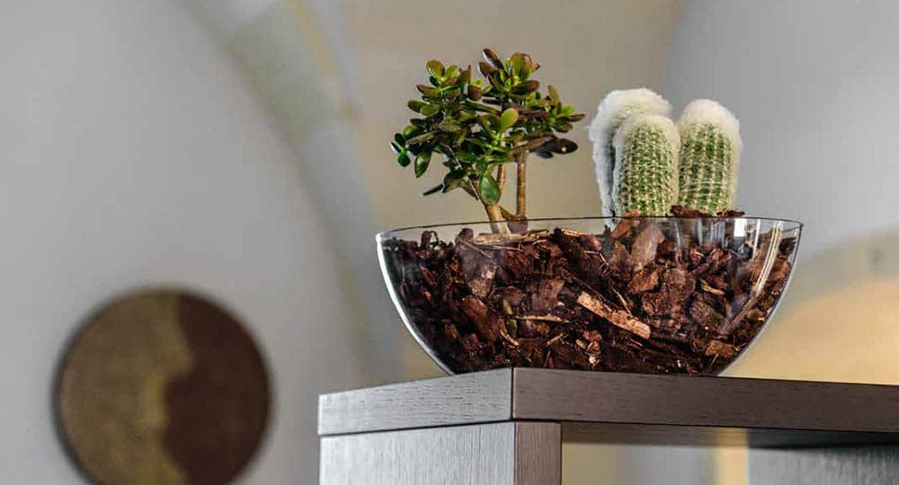 pianta d'appartamento grassa vaso