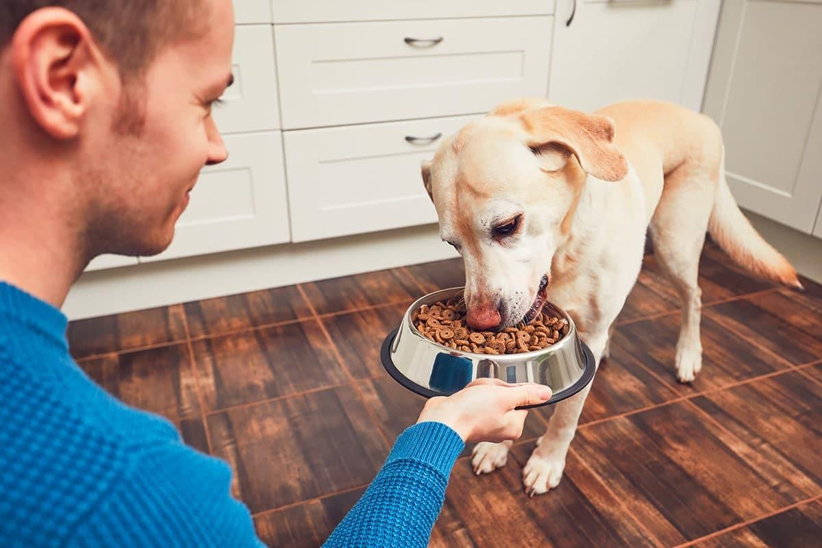 alimentazione cane inverno