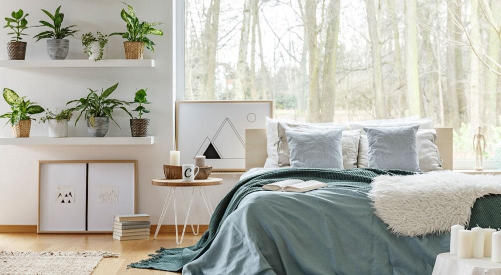 piante per la camera da letto idee