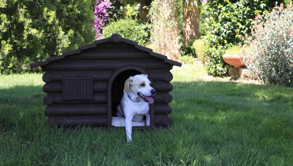 prima cuccia per cucciolo cane